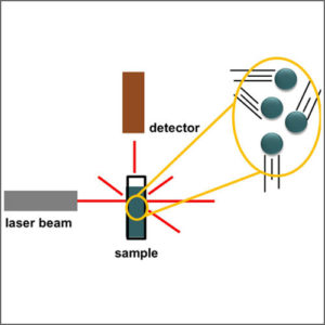 Laser Light Scattering (LLS)